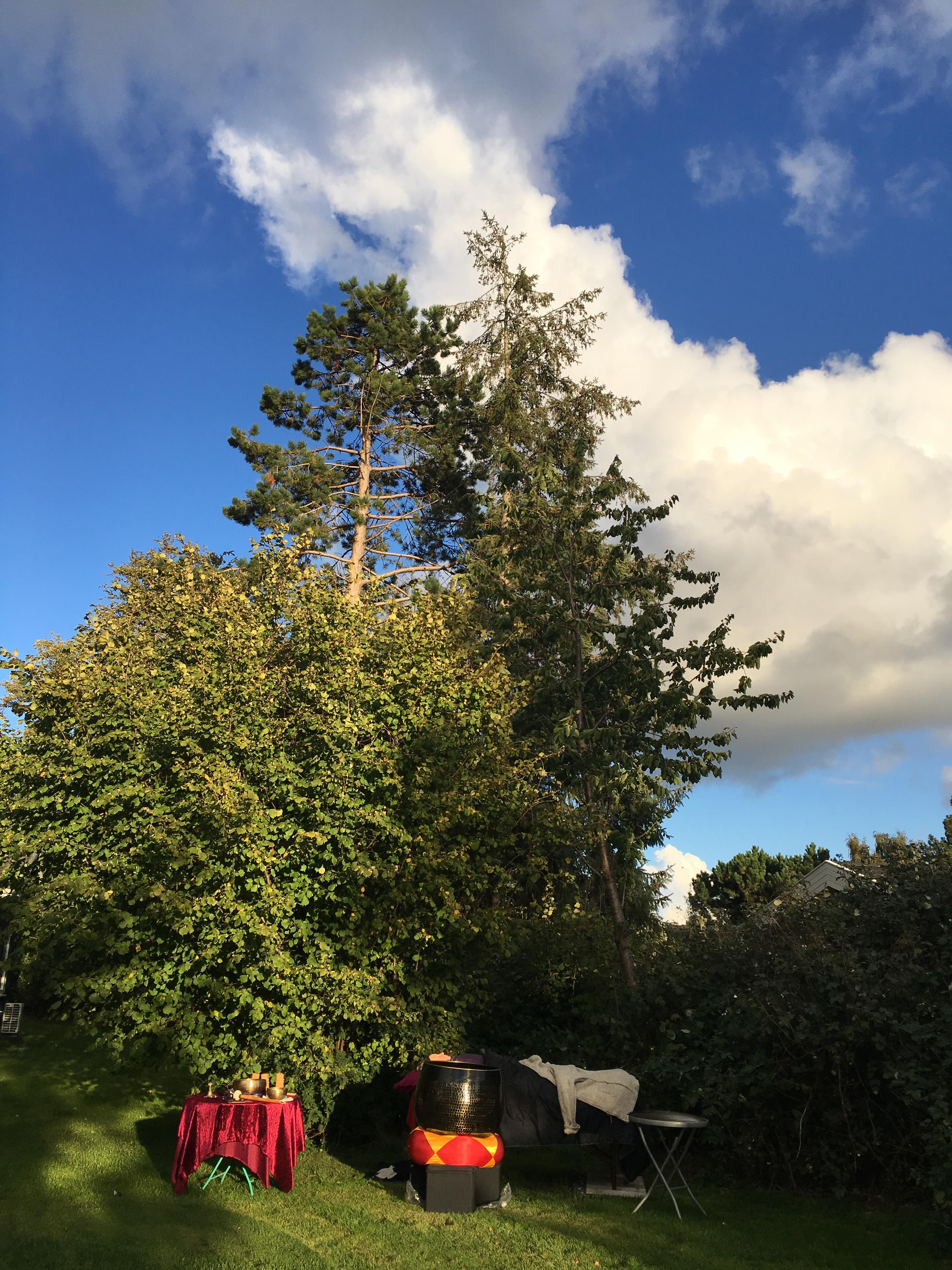 Lydhealing under træer og himmel